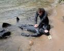 Rescue 012